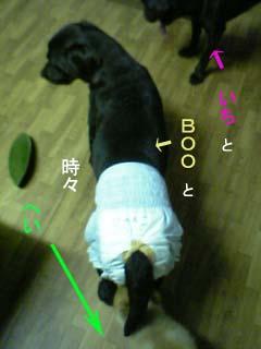 20070709003711.jpg