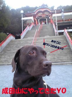 成田山とBOO