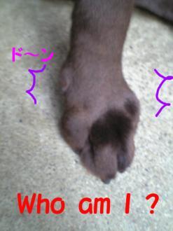 だれの足?