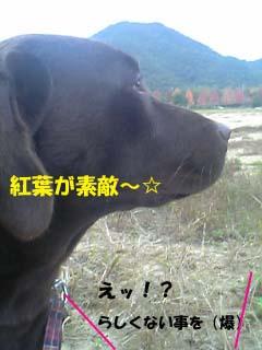 3_20071110001835.jpg