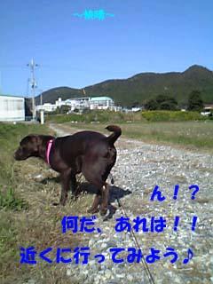 5_20071108220320.jpg
