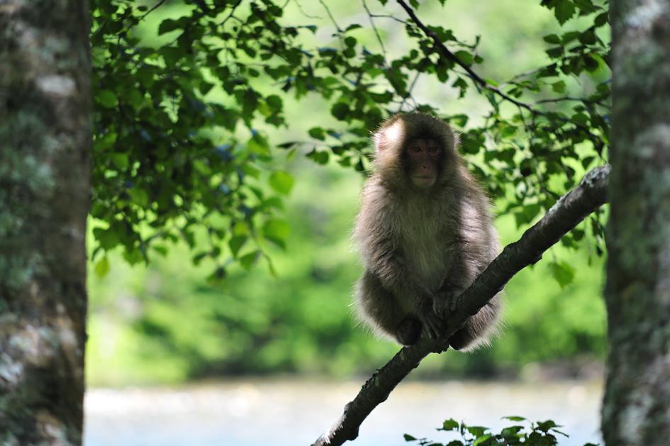 _DSC3213_05小猿.jpg