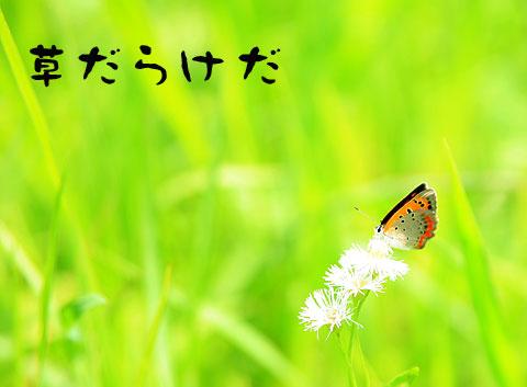 070620_10-.jpg