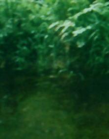 ダートムーアの川に眠る者