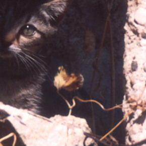 山村の猫 2