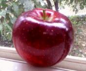 apple1_p.jpg