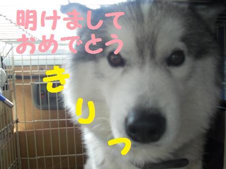 12-01-07-1Qちゃん