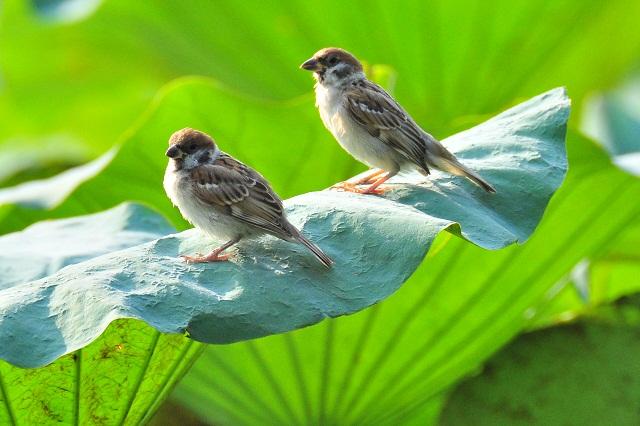 蓮と鳥(2)
