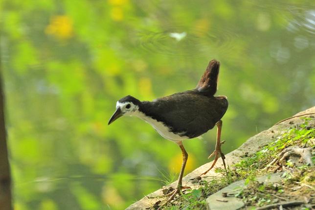 蓮と鳥(1)
