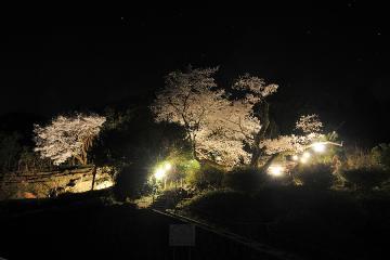 桜紀行2011(7)