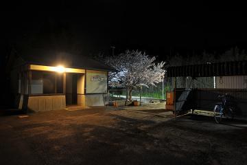 桜紀行2011(17)