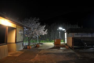 桜紀行2011(18)