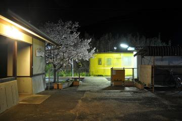 桜紀行2011(21)
