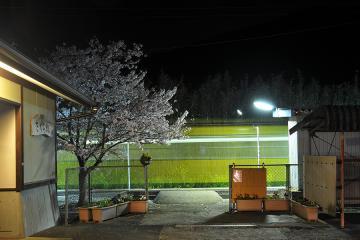 桜紀行2011(22)