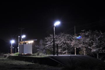 桜紀行2011(23)