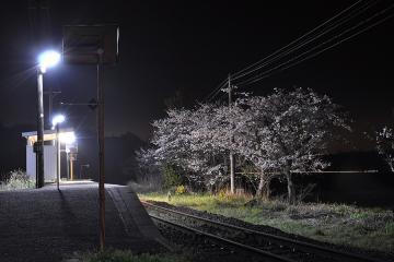 桜紀行2011(24)