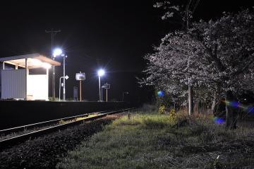 桜紀行2011(25)