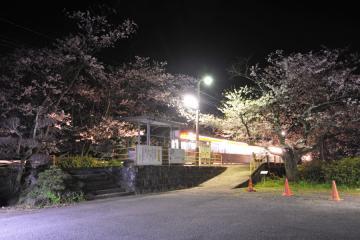 桜紀行2011(27)