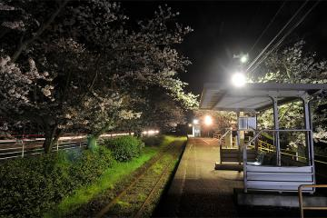 桜紀行2011(29)
