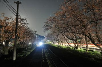 桜紀行2011(31)