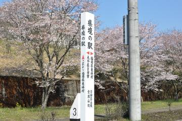 桜紀行2011(34)