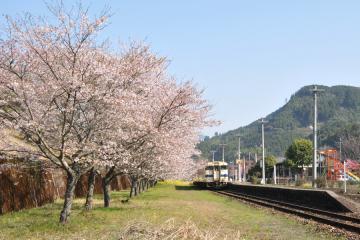 桜紀行2011(39)