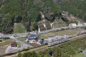 桜紀行2011(40)