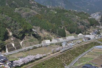 桜紀行2011(41)