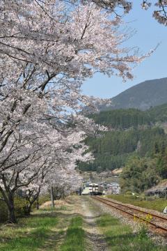 桜紀行2011(44)
