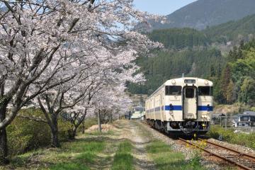桜紀行2011(45)