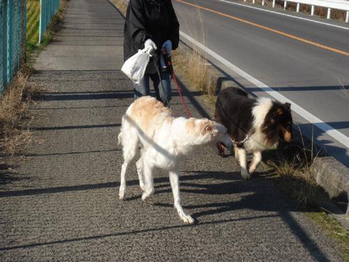 モモと散歩2