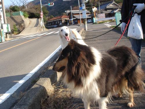 モモと散歩5
