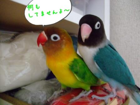006_20110701132808.jpg