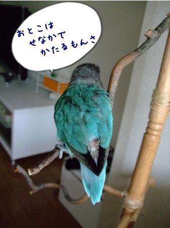 012_20110829203421.jpg