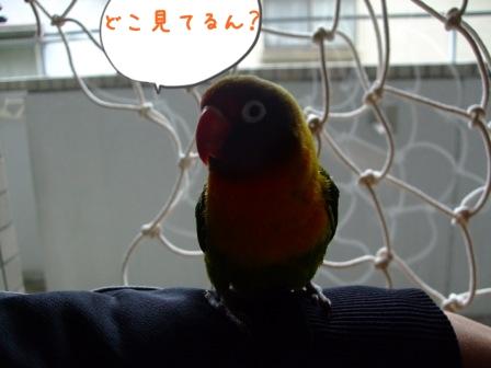 028_20110601161227.jpg