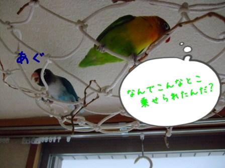 033_20110620092002.jpg