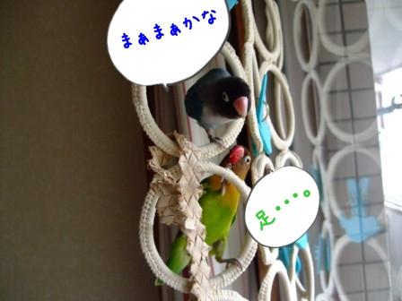040_20110606095357.jpg
