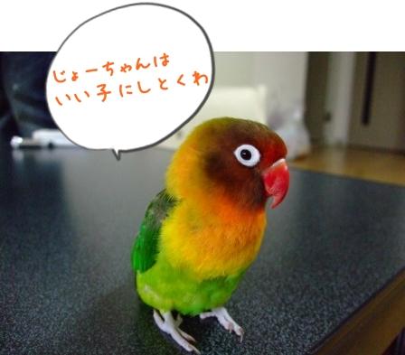 042_20110610131222.jpg