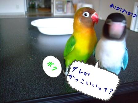 042_20110707113747.jpg