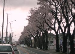 桜2011040903