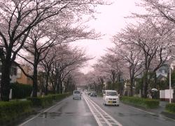 桜2011040902