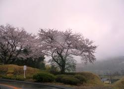 桜2011040901