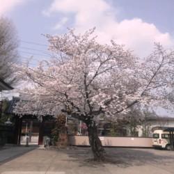 桜20110410