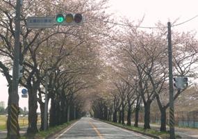 桜20110416