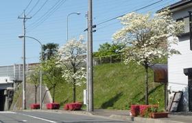 桜20110424