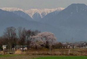 桜20110422003