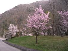 桜2011050201