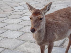 奈良公園の