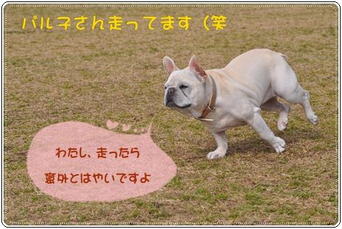 DSC_1006.jpg