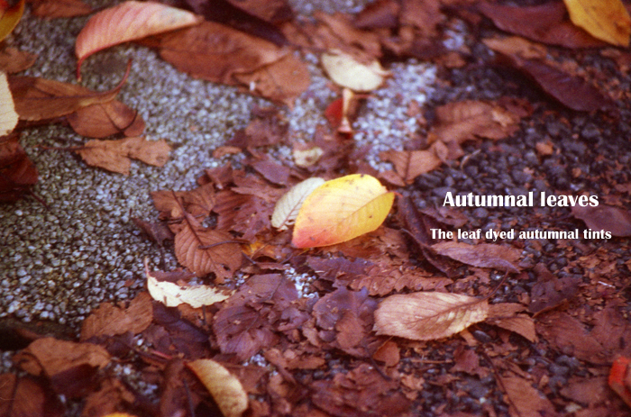 Autumnal leaves2